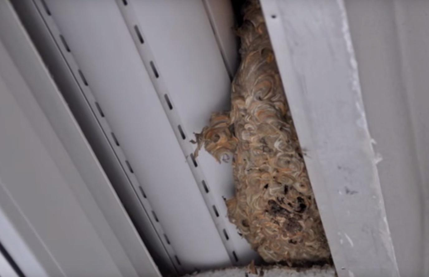 wespennest entfernen imker bei wespen gibt s unterschiede warnung nester nur vom experten. Black Bedroom Furniture Sets. Home Design Ideas