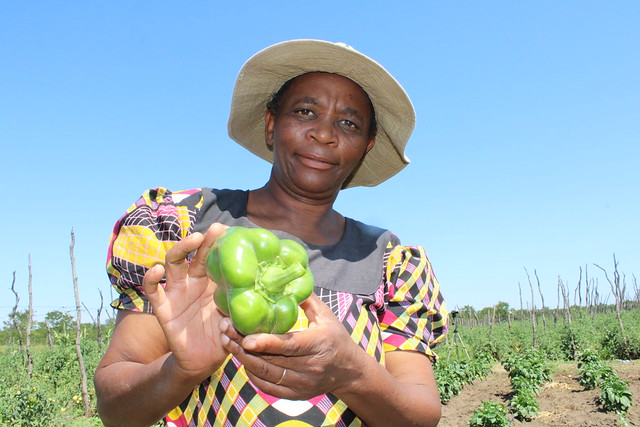Zimbabwean smallholder farmer, Kwanele Ndlovu, shows part of her produce at her farm in Nyamandlovu district, Zimbabwe. Danielle Nierenberg, a world-renowned researcher, activist, food system expert and co-founder of the United States think tank, Food Tank, says that because of COVID-19 people are now concerned about their health and are looking for nutritious foods, instead of processed foods. Credit: Busani Bafana/IPS