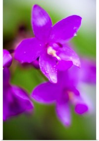 Poster Print Wall Art entitled Purple Orchid I | eBay