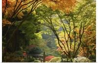 Poster Print Wall Art entitled Japanese Garden | eBay