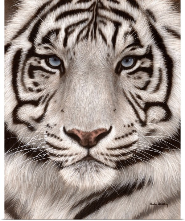 Poster Print Wall Art Entitled White Tiger Face Portrait