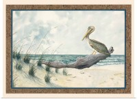 Poster Print Wall Art entitled Pelican on Driftwood | eBay