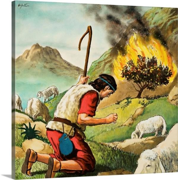 burning bush # 13