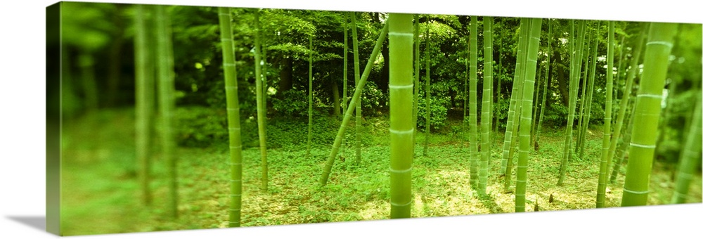 bamboo trees in a