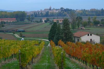 Paesaggio rurale Citt del Vino sostiene disegno di legge