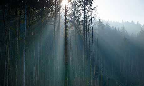 Wild Ennerdale forest : Joe Cornish, capturing the spirit and atmosphere