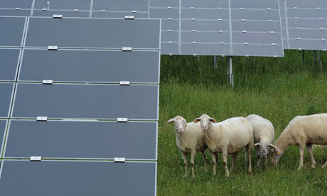 Sheep stand next to solar cell panels