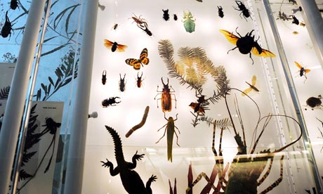 Census of Marine Life claims  8.7m species on earth : Display at Natural History Museum