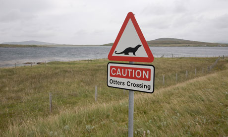 Country Diary : South Uist : Warning signs mark places where otters regularly cross the road.