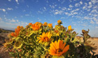 Week in wildlife : The wild flowers of Namaqualand
