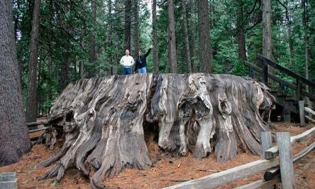 Leo blog on mammoth tree : people on trunk of a giant tree in Calaveras County, California