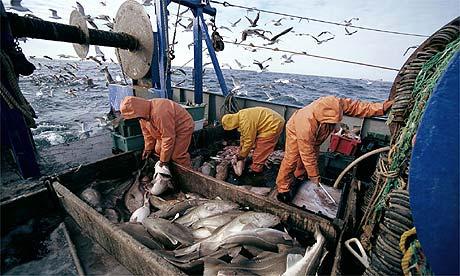 Cod fishermen