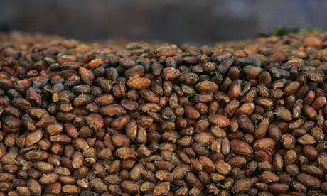 Grains of organic cacao