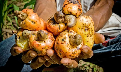MDG Falling cashew prices are hard on exporters