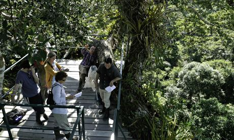 researchers stand in a tree platform in Yasuni National Park, Orellana province, Ecuador