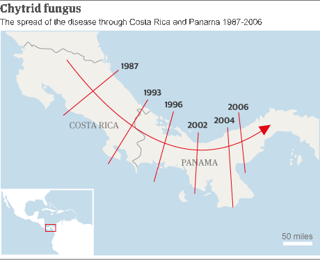 Map - spread of chytrid disease in Central America