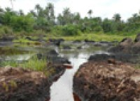 The impact of an oil spill near Ikarama, Bayelsa State, Niger Delta