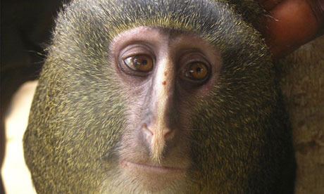 A-new-species-of-monkey-k-007.jpg
