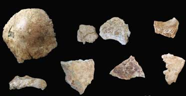 Dating fossiele tanden Duitse dating zinnen