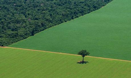 Foresta e colture in Brasile. Foto Rodrigo Baleia/Greenpeace