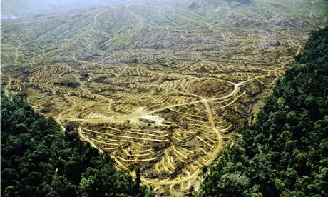 Monbiot blog: Rainforest Clearcut for Oil Palm Plantation in  Sabah, Malaysia