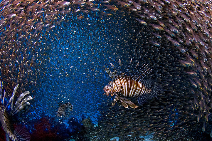 DEEP Indonesia 2010: 4th annual DEEP Indonesia international underwater photography competition