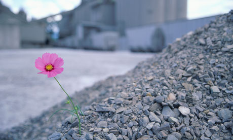 https://i0.wp.com/static.guim.co.uk/sys-images/Guardian/Pix/pictures/2011/4/11/1302517745311/Single-cosmos-flower-amon-009.jpg