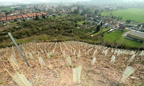 Chardonnay vines planted on a slag heap in Haillicourt, France