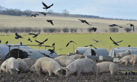 A farm near Devizes, Wiltshire