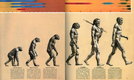 The March of Progress image of human evolution 1965