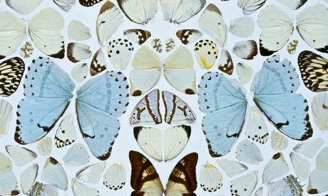Detail from Damien Hirst butterfly artwork, Absolution