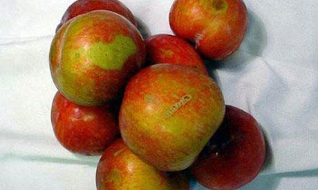 waitrose apples