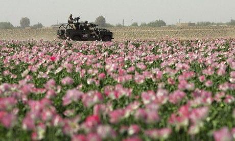 British in Helmand