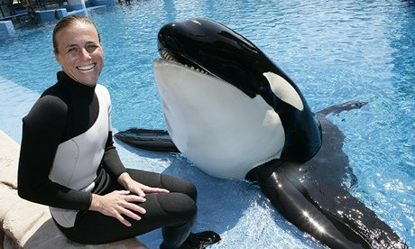 Killer Whale Kills Trainer At Florida Seaworld