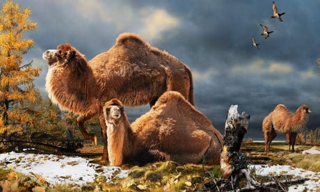The High Arctic camel on Ellesmere Island during the Pliocene warm period, about 3.5m years ago