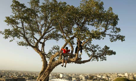 Palestinian boys play in an old tree east of Gaza city