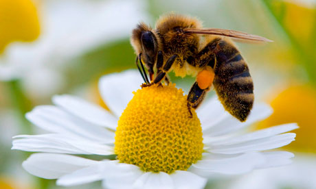 Bee Pictures
