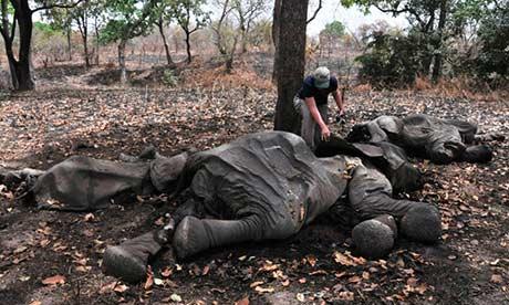 Demand for ivory destabilising central Africa