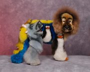 dog grooming competition