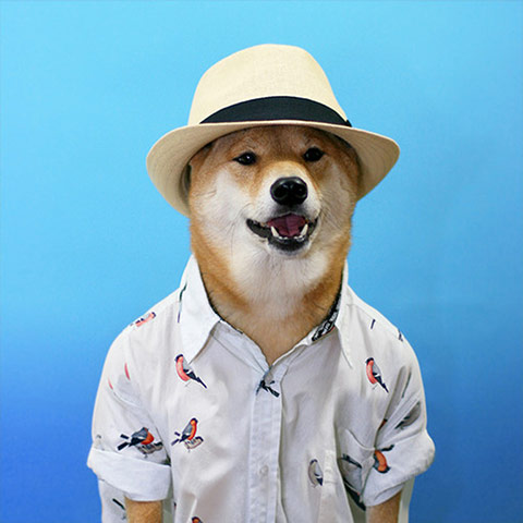 Menswear Dog: Menswear Dog