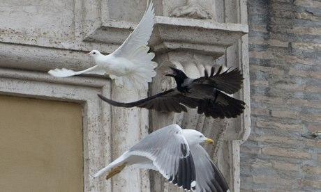 Que hace un cuervo en la plaza de San Pedro?