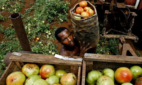 Cuba has begun lending unused land to farmers and co-operatives to boost food production. Photograph: Javier Galeano/AP