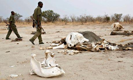 Zimbabwe elephant poaching