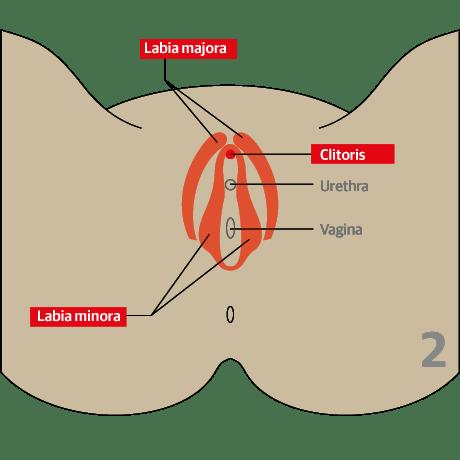 adult female genital mutilation