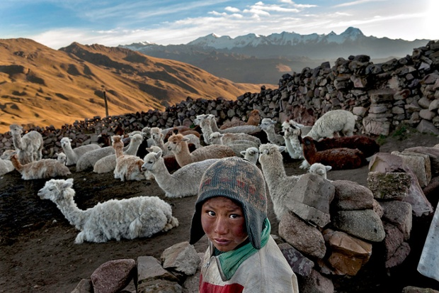 Alvaro Kalancha Quispe, aged 9, releases alpacas and llamas to graze before school,  and rounds them up in the evening. He lives inthe Akamani mountain range of Bolivia, 13,000 feet above sea level, where the homes have no insulation, no electricity, and no beds.