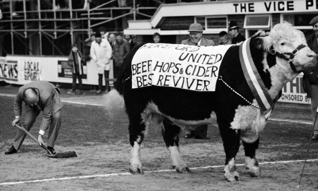 Hereford United Chairman Peter Hill cleans up after the team mascot, a large Herefordshire bull, before the Hereford United v Arsenal FA Cup 3rd Round match played at Edgar Street, Hereford in January 1985. The match was drawn 1-1 but Arsenal trounced Hereford 7-2 in the replay.