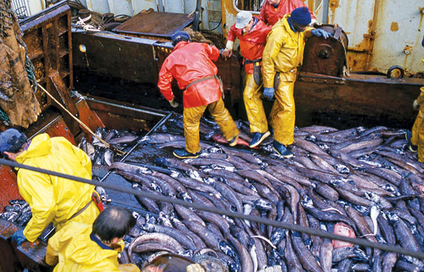 Unwanted fish discarded from an industrial trawler