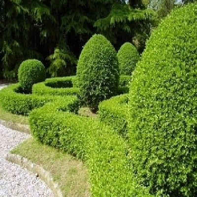 Prezzo Per la Categoria Giardinieri Bergamo  Habitissimo