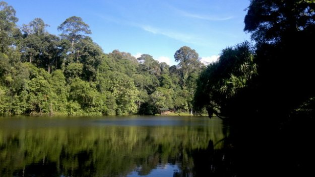 In the Discovery Rainforest outside of Sandakan, travel while you translate