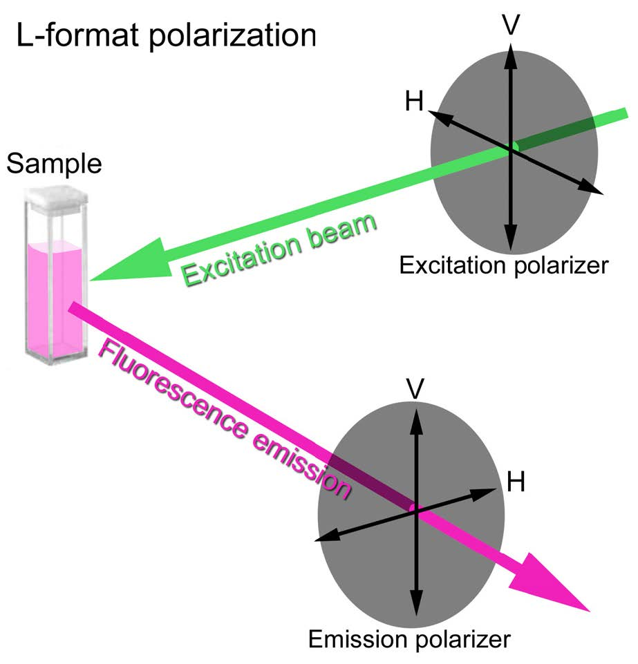 hight resolution of fluorescence anisotropy studies